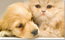 pet insurance Beneficial insurance